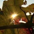 Bőséges bortermés várható – Szent Vincét ünnepelték Ópusztaszeren