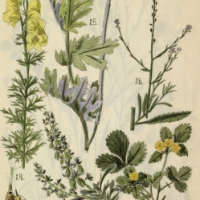 Művészi növényábrázolások a  Somogyi könyvtárban