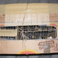 Védett madarakat csempésztek Kiszombornál