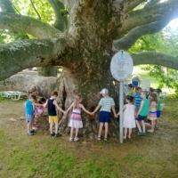 Ismét magyar fa nyerte meg  az Európai Év Fája versenyt