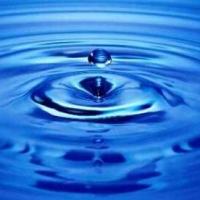 Mikrobagyűjteményt hoztak létre víztisztításra szegedi és temesvári kutatók