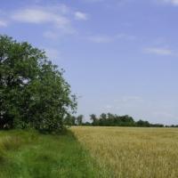 Összefogás az agrárterületek biológiai sokféleségének megőrzése érdekében
