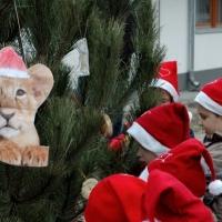 Állatok karácsonya a Vadasparkban december 13-án