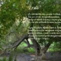 Tollasok és lombosok – madarak és fák napi program a Vadasparkban
