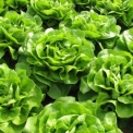 Rákkeltő dioxinok szennyezik a mezőgazdasági termékeinket?